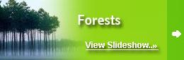 Forest Around the World